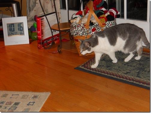 Christmas 2010 156