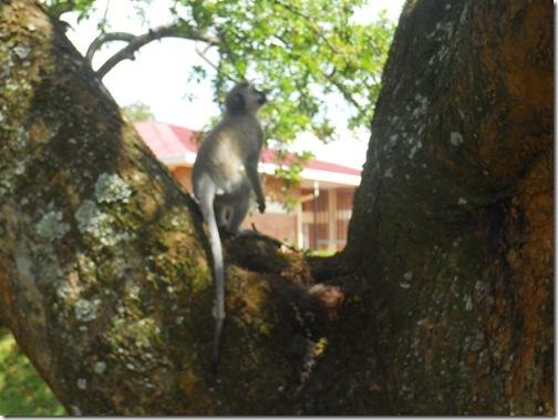 Rwanda2011 084