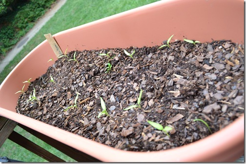 Blog Pictures 023