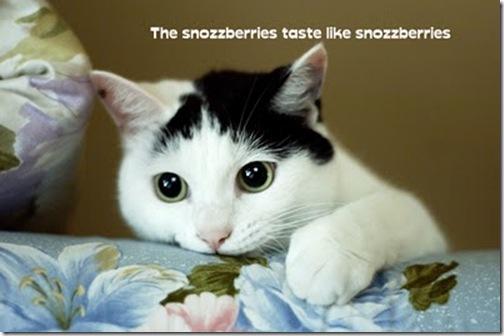 kittyeatcouch