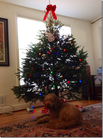 louis and tree2